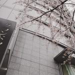 今年最後かなの桜 ホテルグランドアーク半蔵門にて
