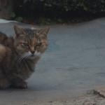 ホテルニューオータニの日本庭園にいる猫と仲良くなりたい