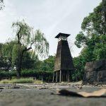 【前撮り撮影】銀杏香る清澄公園にて秋の一日